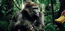 gorilla fm